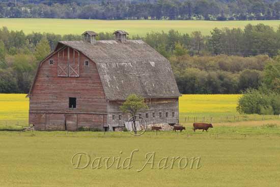Northern Alberta Farmland.
